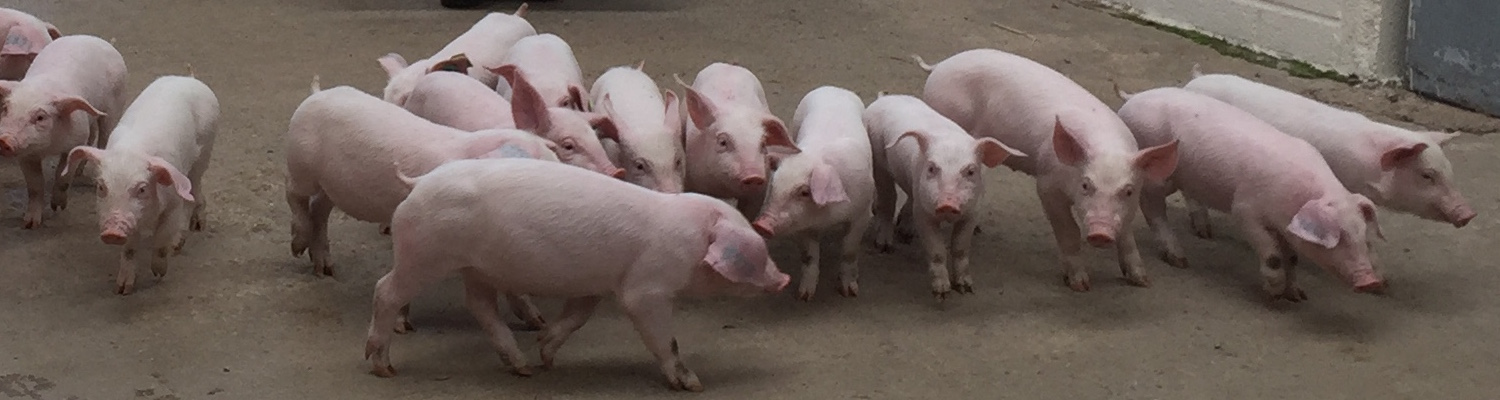 Worm egg counts for pigs, used as part of a long-term strategy, will help you monitor worm infestations in your pigs.
