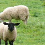 The rising threat of anthelmintic resistance