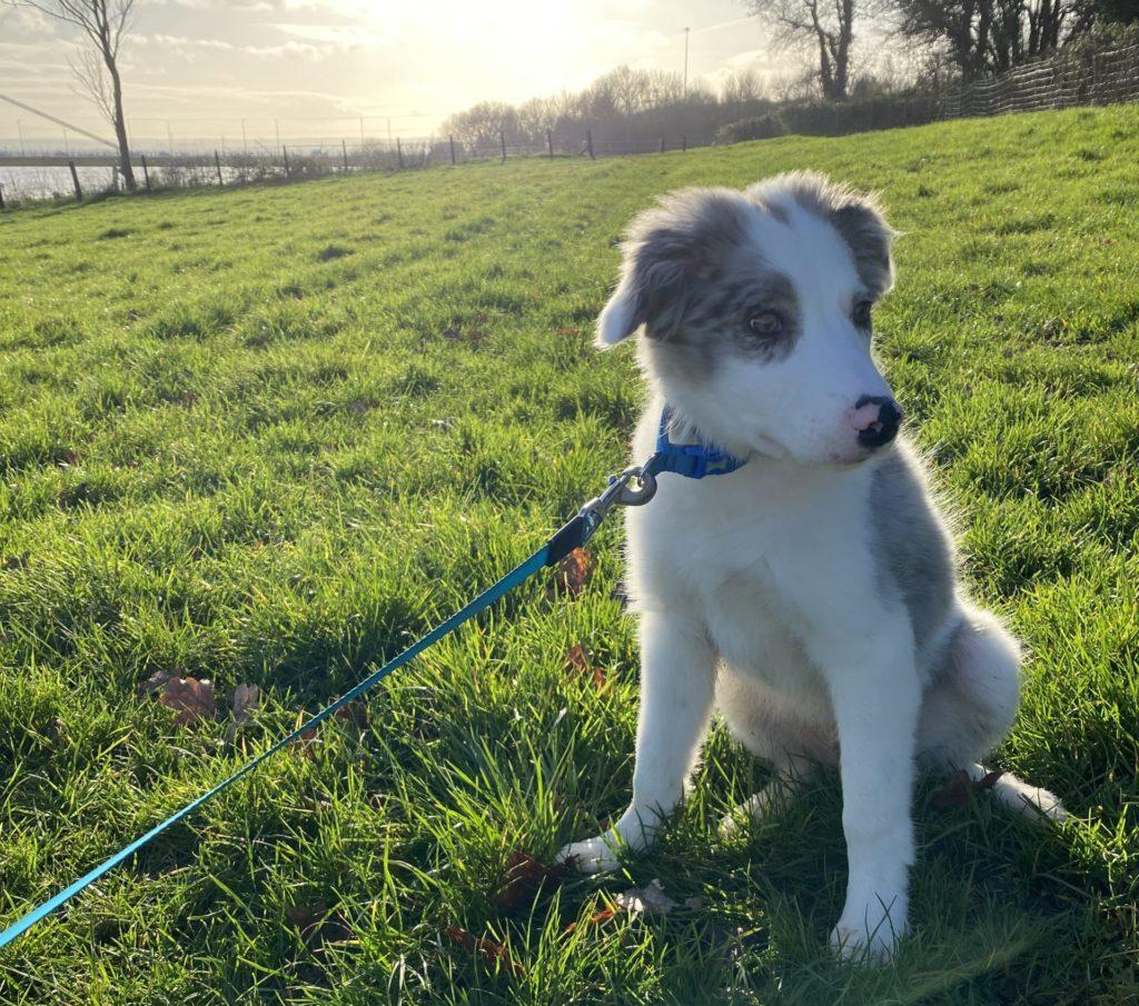 lungworm|dog|puppy|ridgeway|research