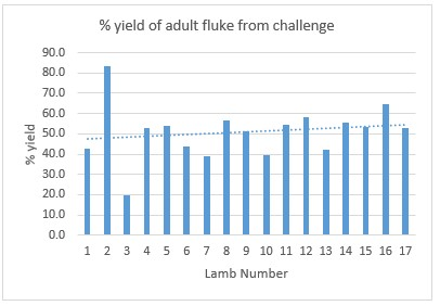 Ridgeway Research Ltd| Yeild of adult fluke from challenge