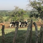 International Women's Day: Female African Dairy Farmers