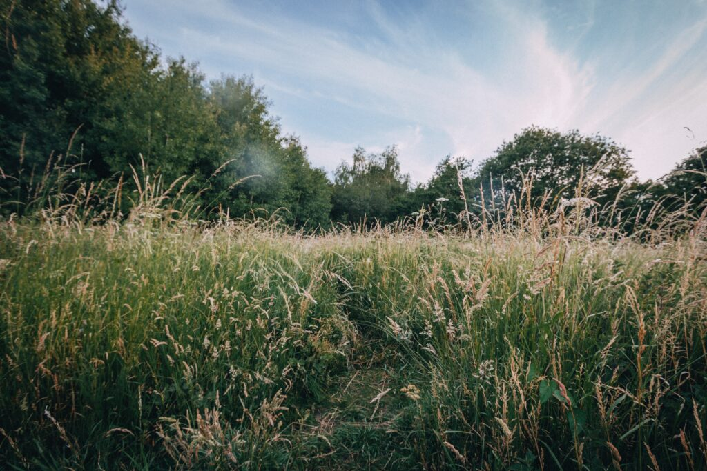 Long grass is the perfect habitat for ticks to thrive.