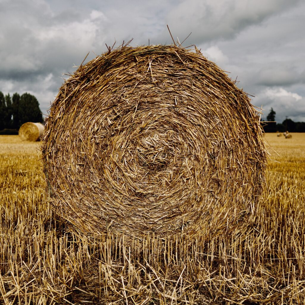Poorly stored silage can harbour the bacteria which cause listeriosis for many months.