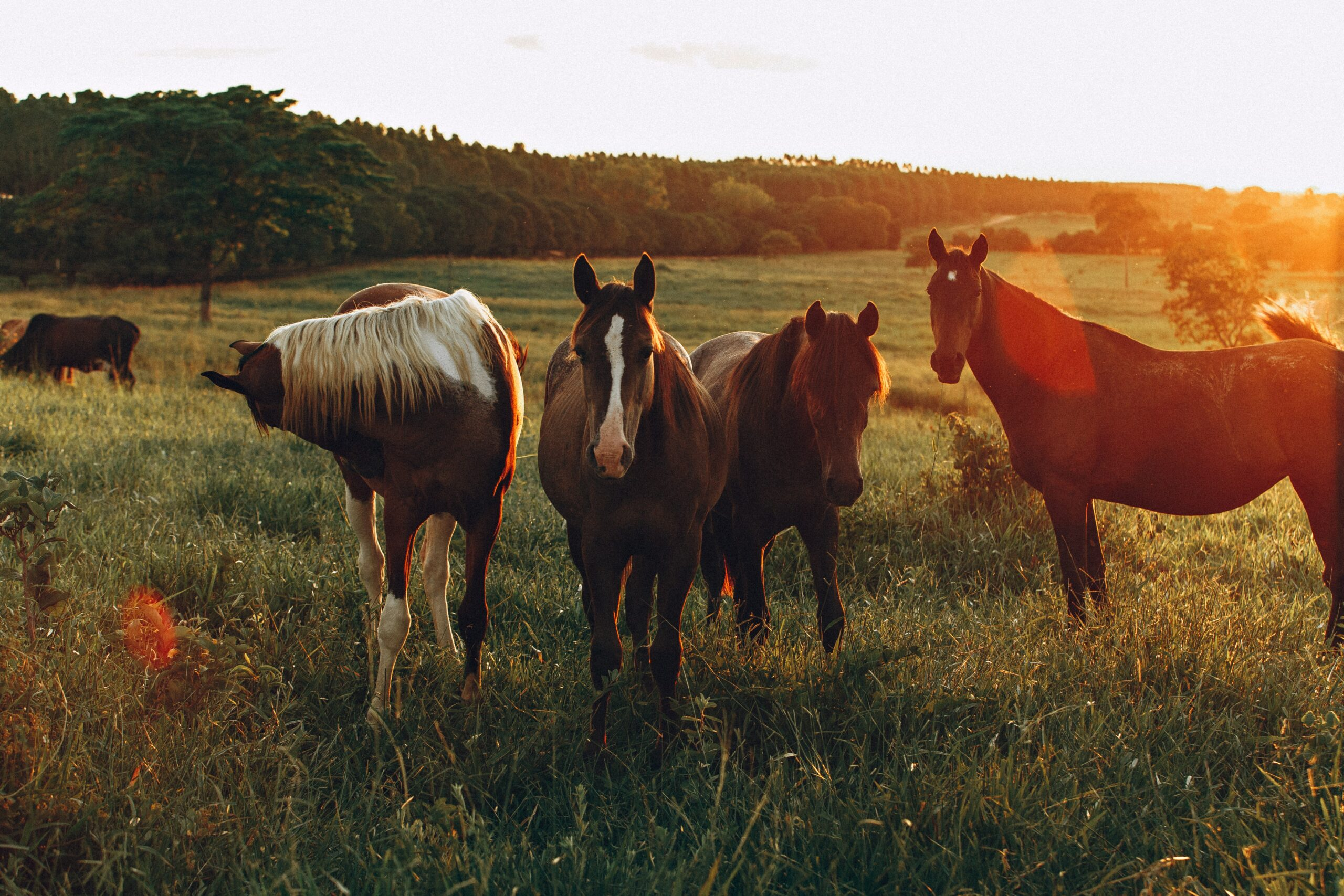 Overstocking horses in a field increases risk of parasites