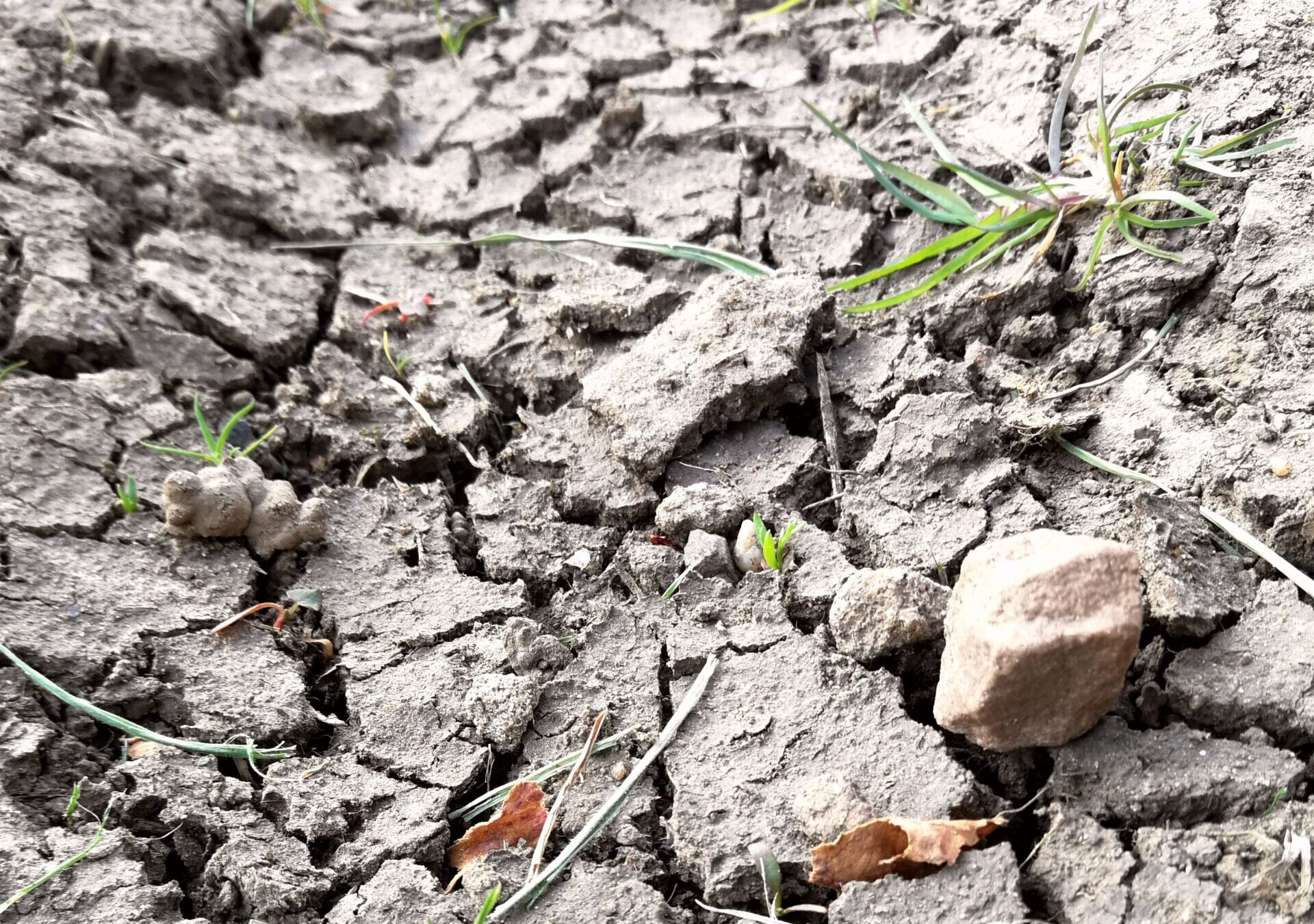 Grazing deficits are common as this year's spring is too dry and cold for optimal grass growth.
