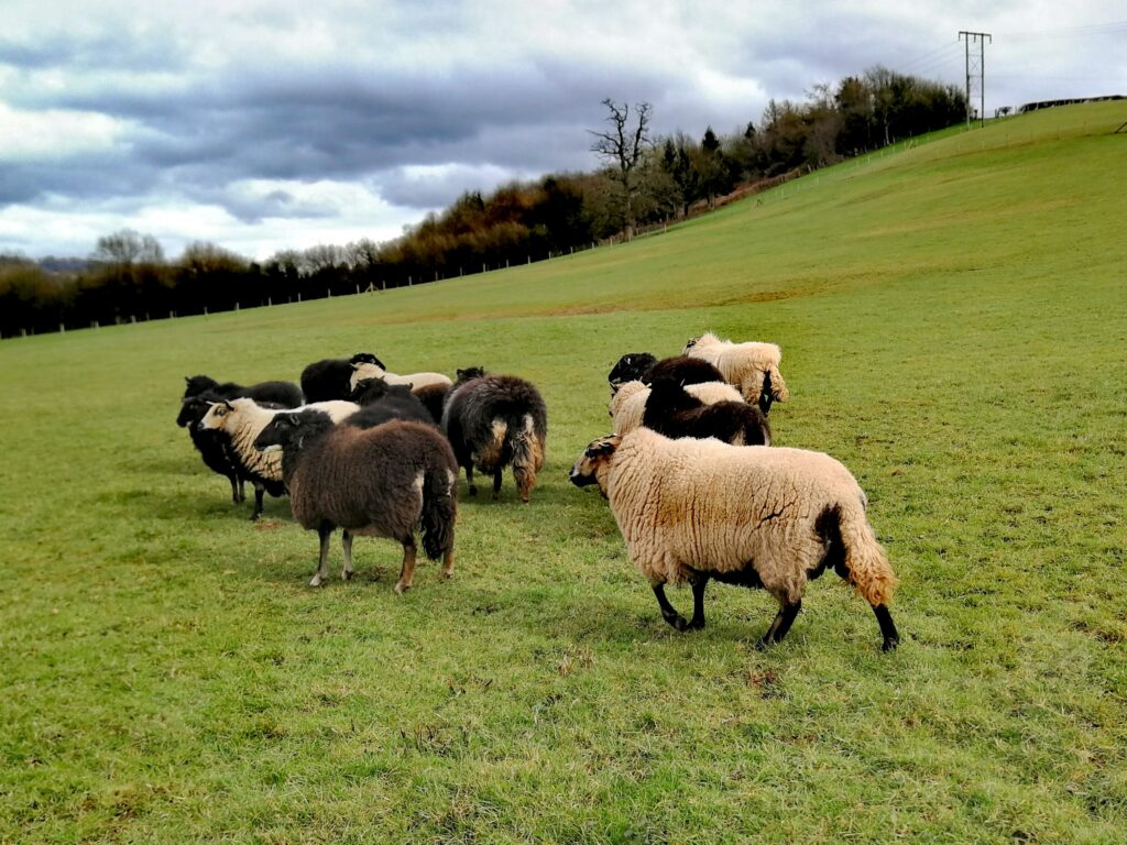 Animals out to pasture can pick up parasites.