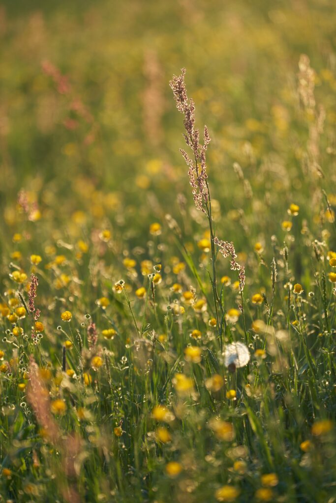 Native species of plants are a key aspect of regenerative agriculture.