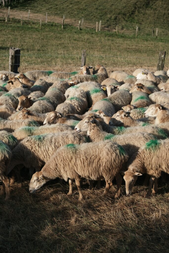 Anthelmintic resistance is a huge problem in livestock agriculture.